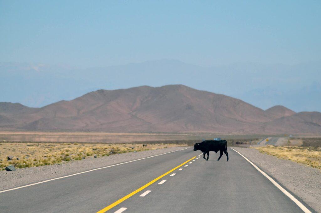 Road 40 in Argentina