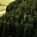 black forest germany road